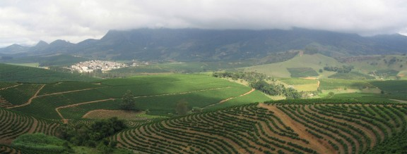Kaffeeplantage in São João do Manhuaçu City - Minas Gerais State - Brazil